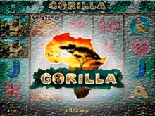 Играть бесплатно онлайн в Gorilla